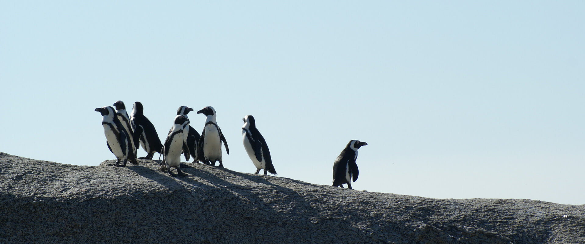 Walk with Penguins at The End of The World
